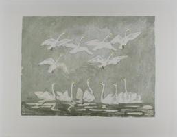Hermann Teuber: Fliegende und schwimmende Schwäne