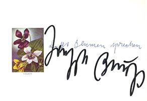 Joseph Beuys: Laßt Blumen sprechen