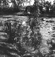 Willy Maywald: Jardin de Claude Monet