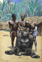 Friedrich Wilhelm Kuhnert: Gorilla