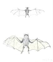Kiki Smith: bat