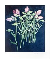 Bruno Bruni: Amaryllis Blüten